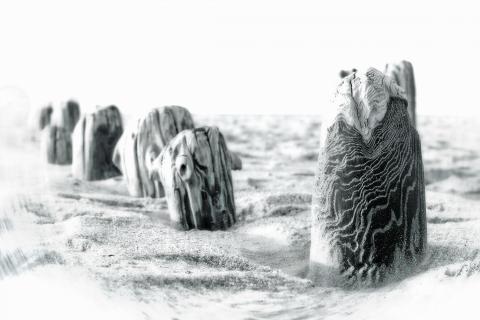 10 BAUMSTARKE FOTOS_Thomas_Steinborn