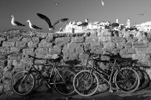 Möven mit Fahrrad