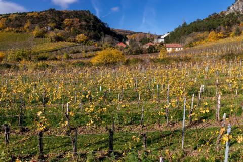 Herbst im Weingarten 07