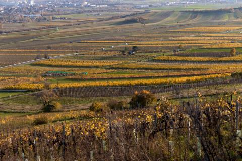 Herbst im Weingarten 02