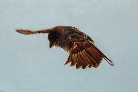 Sperlingsflug