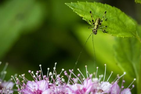 Jumper ein kleines Insekt