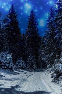 Winterwald im Mondlicht