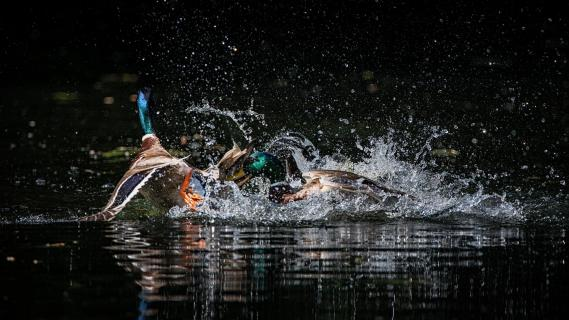 Wasserschlacht