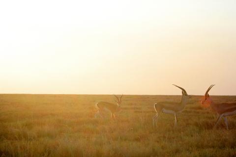 Abendlicht über der Serengeti