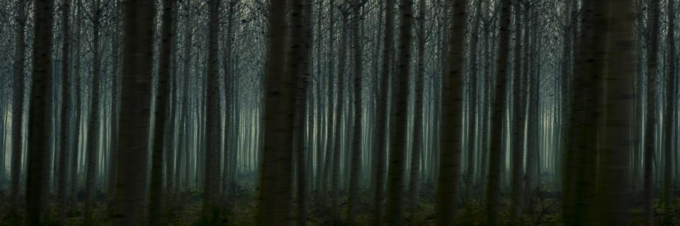 Passing by Forests