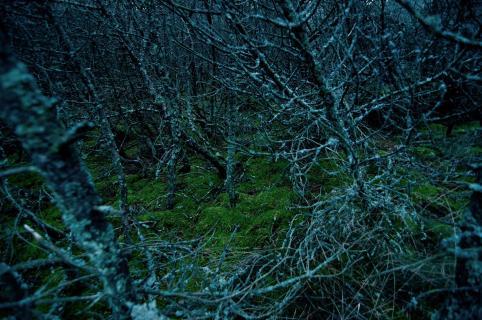 Turquoise Woods