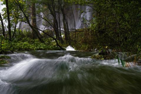 Wasserwald