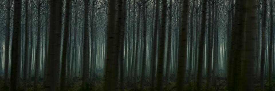Vorbeiziehende Wälder