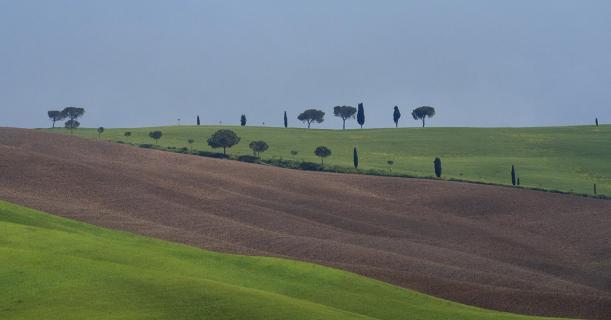 toskanische Bäume