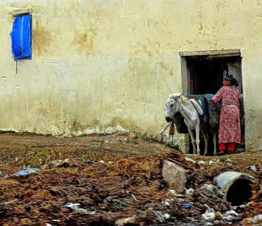 Landwirtschaft in Marokko
