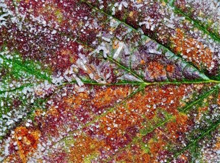 Blatt mit Eiskristallen