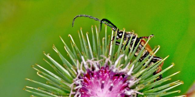 Käfer im