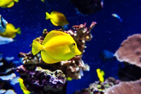 Yellow Thang