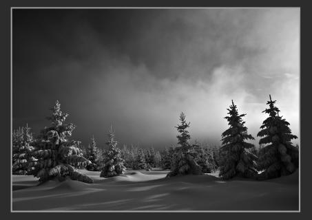 Winter im Brockenfeld