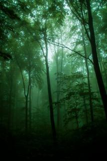 Traum Wald