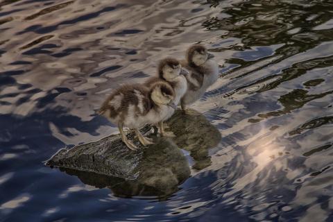 Die drei von der Teichstelle