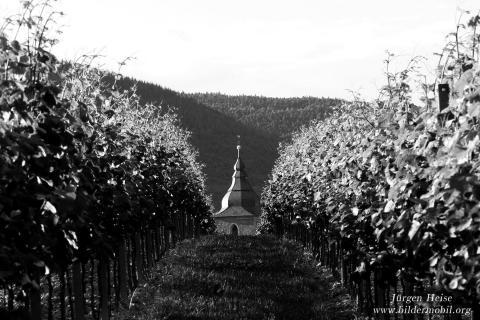 Der Weinberg des Herrn.