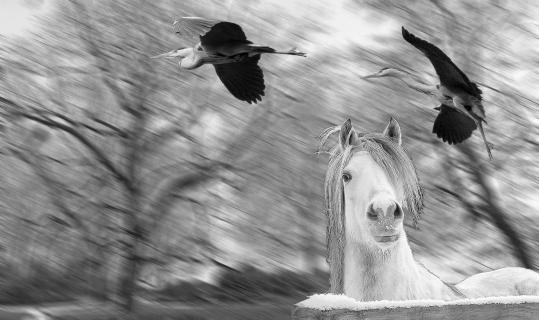 Les deux hérons et cheval