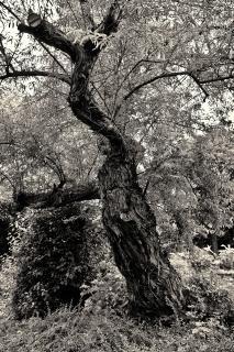 Baumstrukturen