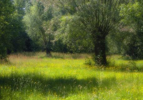 Weiden in Auenlandschaft