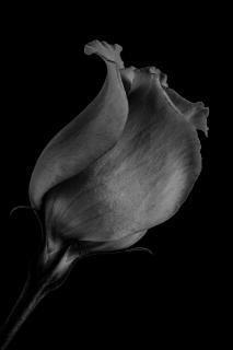Formen und Linien einer Blüte