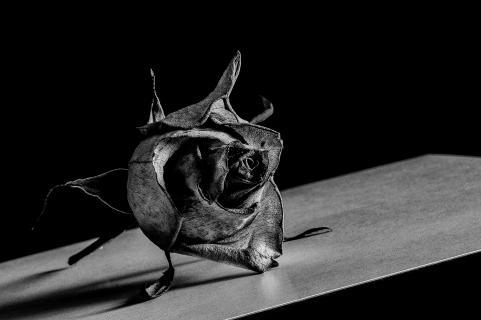 Rose im metallischen Glanz