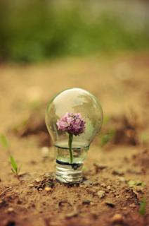 real life bulb