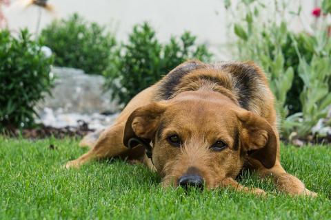 12_Fotografieren Sie ein Haustier_Viktor Kuen