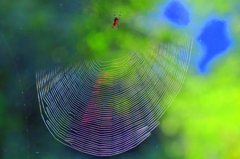 www.(Window-wide-web)