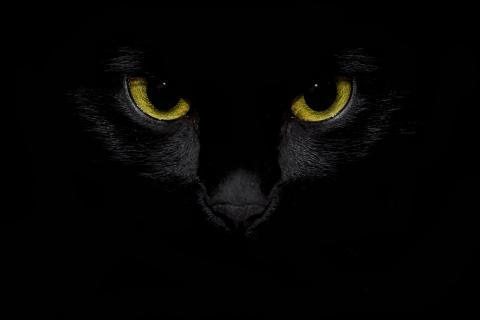 Stare of the Black Cat
