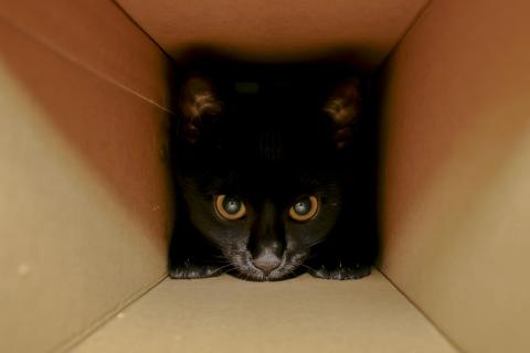 Polly in the Box