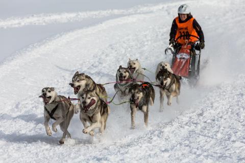 Hundeschlittenrennen 3