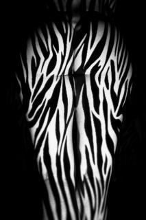 Zebra01