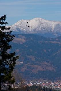 Flugkünste von Raben vorm Alpenpanorama