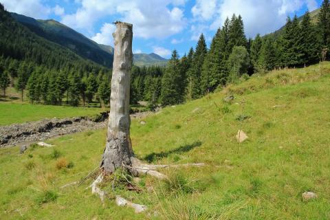 Verwitterter Baumstamm auf Almweide