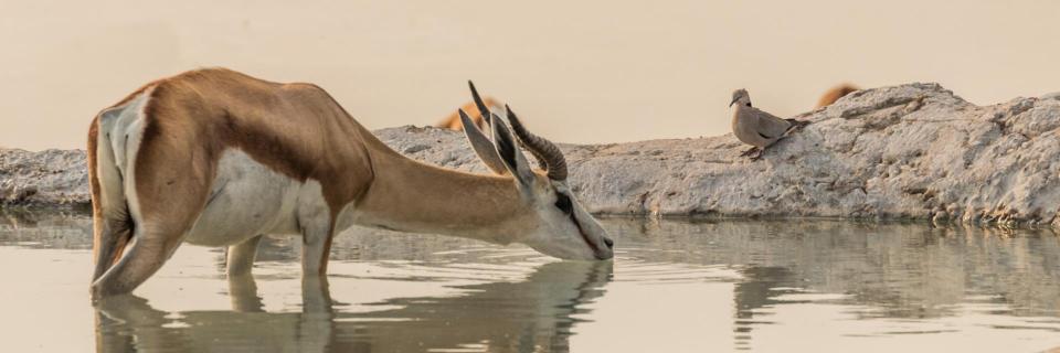 Am Wasserloch im Etosha-Nationalpark