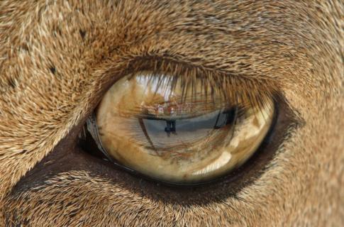 im Auge sichtbar