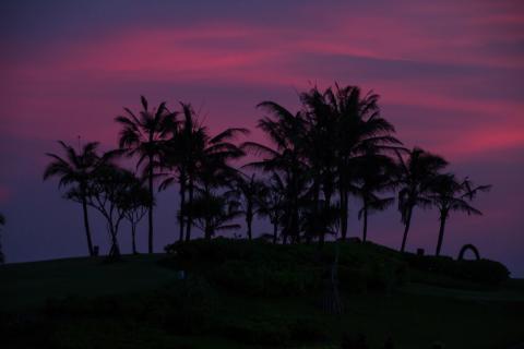 Palmen in angehender Nacht