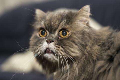 Katzen - Portrait
