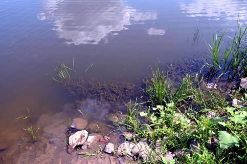Am Wasser