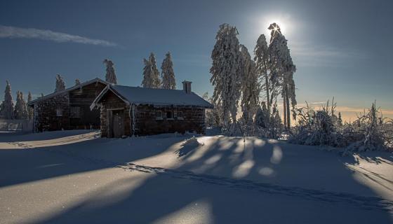 Winterstern...