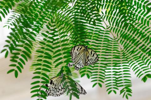 Unter der Mimose