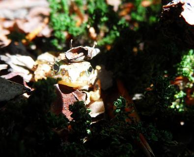 Frosch posierte in aller Ruhe. Daher mein kleiner Froschkönig.