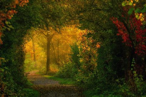 Der Weg ins Auenland