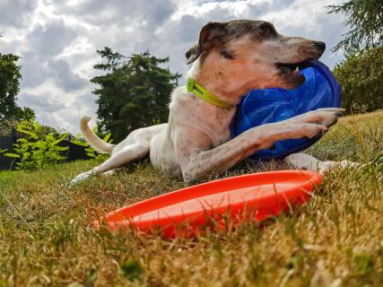 Frisbee Pause