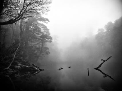 Verwunschener Walds