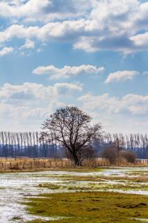 Baum in der Wiese