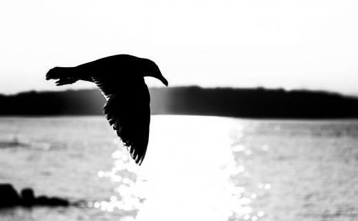 Ins Licht geflogen