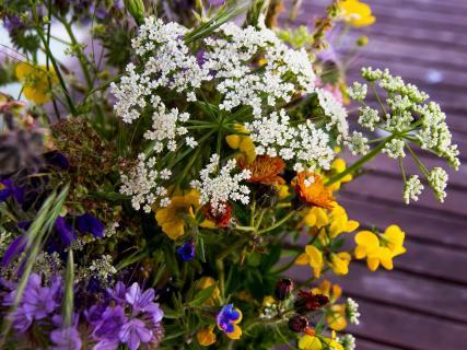 Feld-und Wiesenblumen